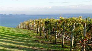 Bellarine Taste Trail